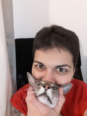 8. Дом там, где твой кот